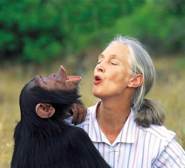 Die Frau die mit den Schimpansen lebte